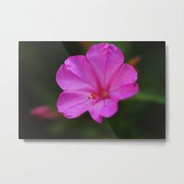 Four Oclock Flower In Pink Metal Print