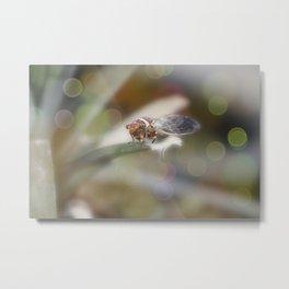 Cicada on Pineapple Tree in Summer Light Metal Print