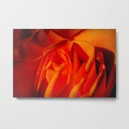 Beautiful Orange Rose Flower Macro Metal Print