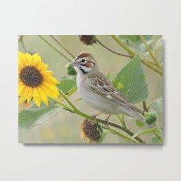 Lark Sparrow Metal Print