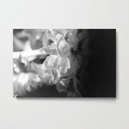 flower close up - black/white - ten Metal Print