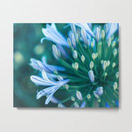 Lily of the Nile Fine Art Photography Metal Print