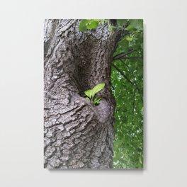 A new twig Metal Print