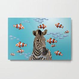 Zebra Underwater Clownfishes Metal Print