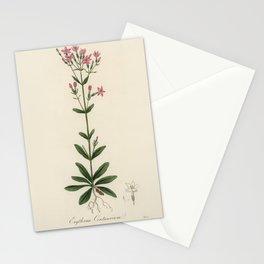 European centaury (Erythraa centaurium  from Medical Botany (1836) by John Stephenson and James Mors Stationery Cards