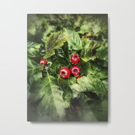 Toxic red European rowan berries Metal Print