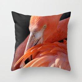 Cuban Flamingo Grooming Throw Pillow