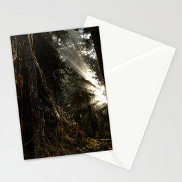 Light Through the Old Growth Stationery Cards