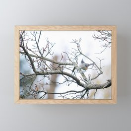 Tufted Titmouse Framed Mini Art Print