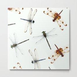 Dragonfly Pattern Metal Print