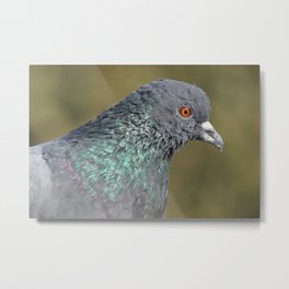 The great Indian pigeon Metal Print