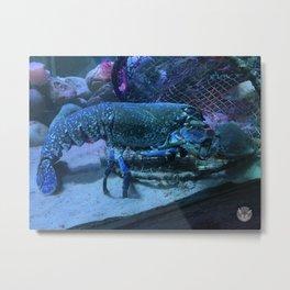 Blue Lobster Metal Print