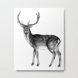 Fallow deer stag - ink illustration Metal Print