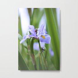 Oak Creek Pond Water Lily Metal Print