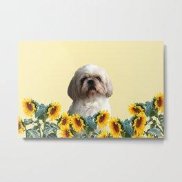 Paul Top Model - Shih tzu dog - Sunflower leaves Metal Print