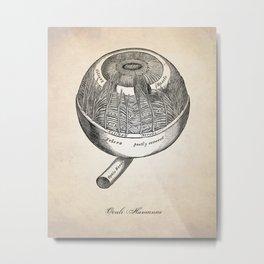 Human Anatomy Eye Art Print Metal Print