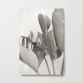 Strelitzia Nicolai in sunlight - Black and white tropical art print Metal Print
