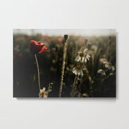 Spring morning | photo print wildflowers in field by sunrise Metal Print