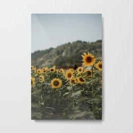 German sunflower field near mountain | Colourful Travel Photography | Waldkirch/Freiburg, Germany (Europe) Metal Print