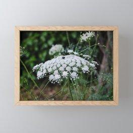 Queen Anne's Lace Framed Mini Art Print
