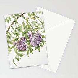 American Wisteria (Kraunhia frutescens) (1925) by Mary Vaux Walcott Stationery Cards