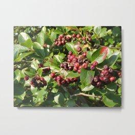 ARONIA TREE OF FRUIT ABUNDANCE  Metal Print