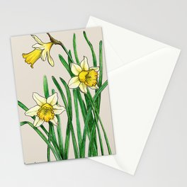 Botanical illustration of a narcissus Stationery Cards