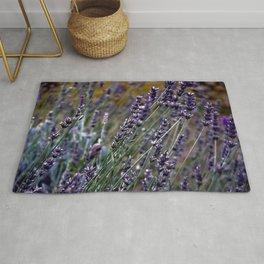 French Lavender Rug