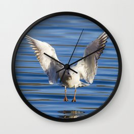 Black-headed gull (Chroicocephalus ridibundus) Wall Clock