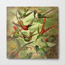 HUMMINGBIRD COLLAGE- Ernst Haeckel Metal Print