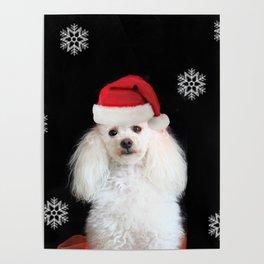 Christmas poodle dog Poster