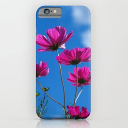 Pink Cosmos, Blue Sky 3 iPhone Case