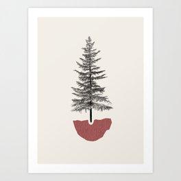 Fir Pine Kunstdrucke
