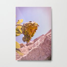 Hanging Her Head - California Coastal Sunflower Metal Print