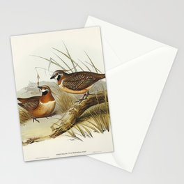 Plumed Partridge Bronze-wing (Geophaps plumifera) illustrated by Elizabeth Gould (1804–1841) for Joh Stationery Cards