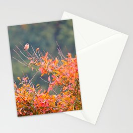 Autumn Stonechat | Saxicola Rubicola | Veluwe, The Netherlands | Fine art bird photography Stationery Cards