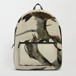 416 I. Hairy Woodpecker 2. Red bellied Woodpecker 3. Red shafted Woodpecker 4. Lewis' Woodpecker 5. Backpack