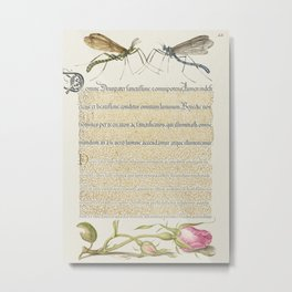 Crested Crane Fly Insect and French Rose from Mira Calligraphiae Monumenta or The Model Book of Call Metal Print