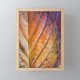 Autumn Colours Framed Mini Art Print