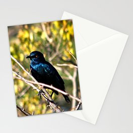 African Blue Bird Perched Tree Branches Stationery Cards