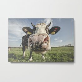 Inquisitive Cow Metal Print