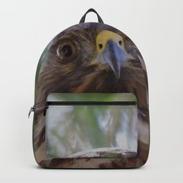 Hawk Eyes in the Willow Backpack