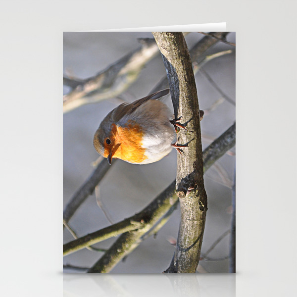 Robin Redbreast Stationery Cards by Pirminnohr (CRD915575) photo