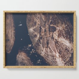 Crying tree trunk with resin, dark moody fine art photography Serving Tray