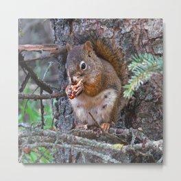 Squirrel Friend Metal Print