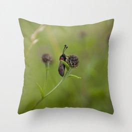 Six-Spot Burnett Moth Throw Pillow