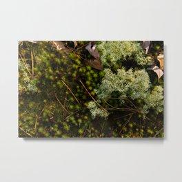 Moss Layers Metal Print