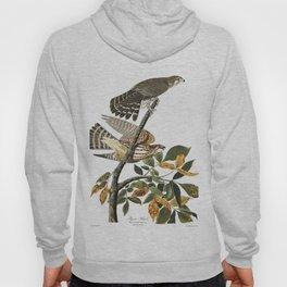 Pigeon hawk, Birds of America, Audubon Plate 92 Hoody