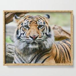 Sumatran Tiger Eye Contact Serving Tray