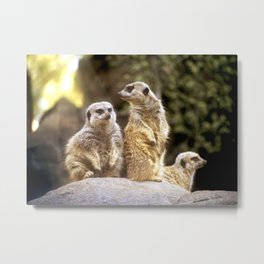 Act Natural Meerkats Metal Print